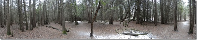woods_1000