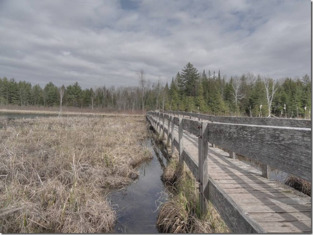Frink Outdoor Education Centre,Conservation Area,frog,ontario,marsh,HDR,photography,nature, board walk