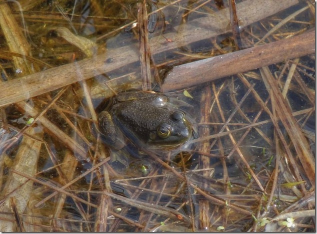 Frink Outdoor Education Centre,Conservation Area,frog,ontario