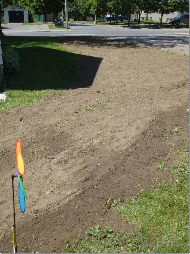 gardening,reclamation,nature,outdoors,gardens,clover