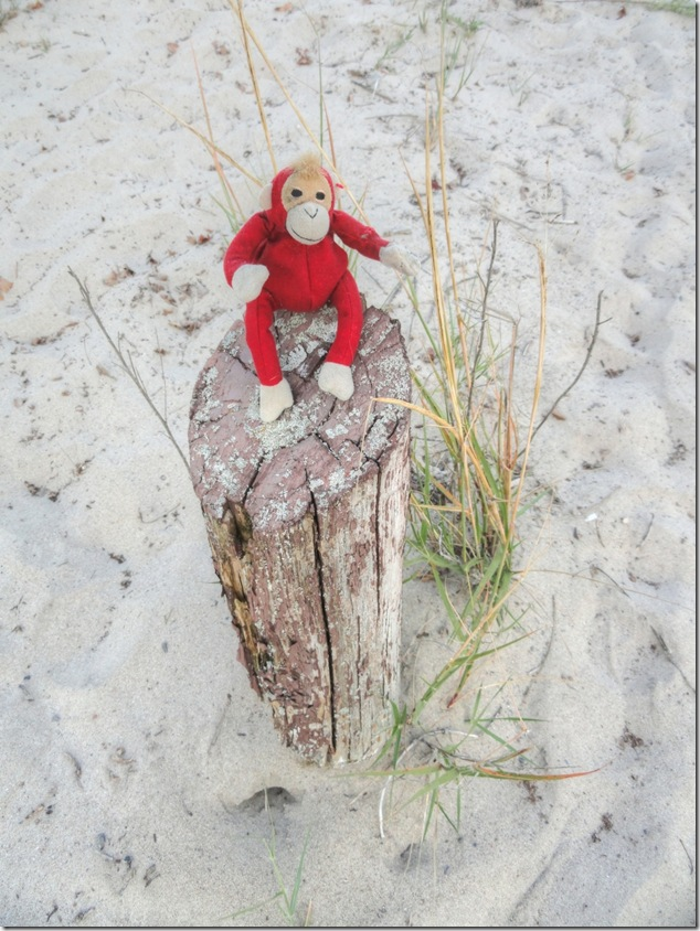 Railway Monkey,North Beach Provincial park,Lake Ontrario,Prince Edward County