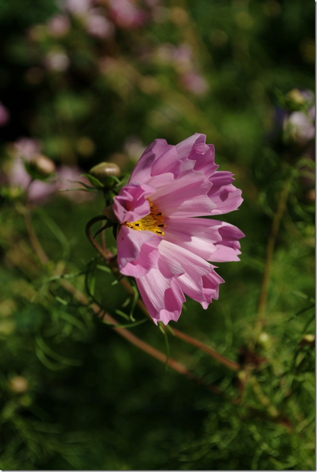 flowers,depth of field, angel,crativity,purple,photography