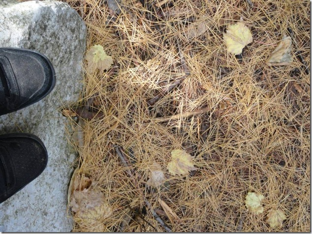 Frink Outdoor Education Centre,nature,life,Marsh Boardwalk,Quinte Conservation