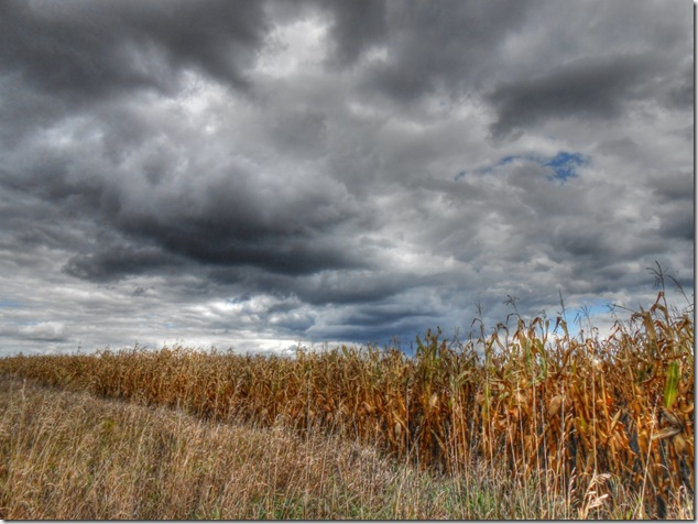 back roads Ontario,corn,file,Ontario,clouds,photography