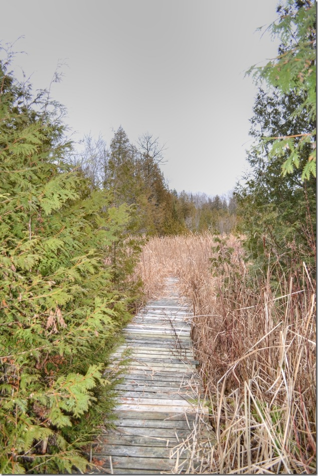 winter,outdoors,nature,Frink Outdoor Education Centre