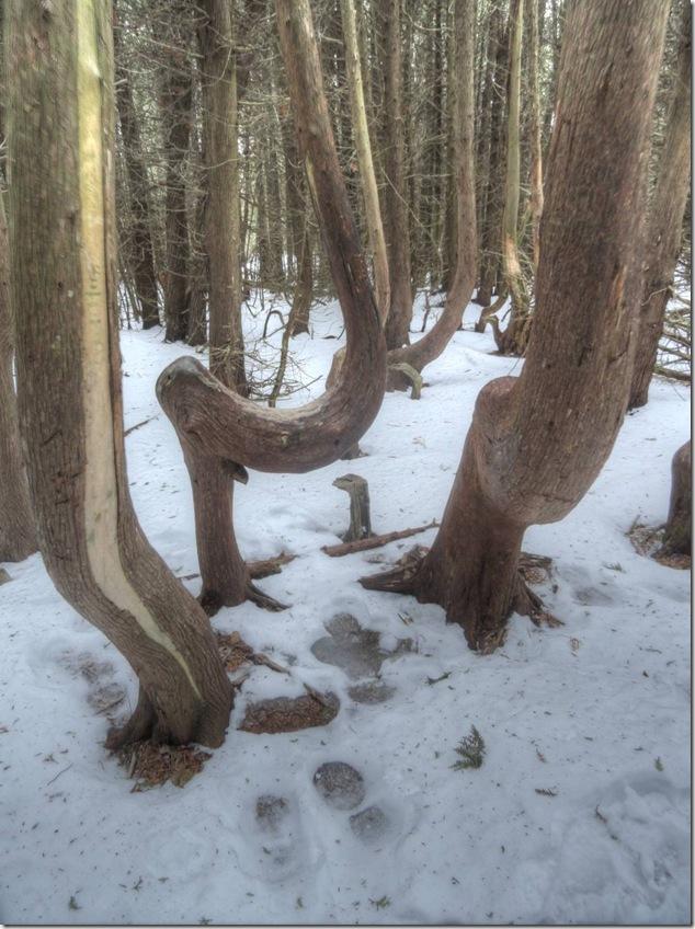addle trees,Presqu'ile Provincial Park,winter
