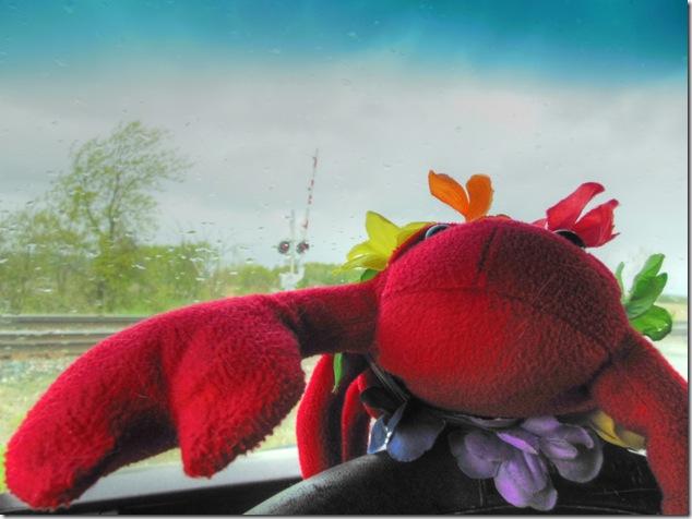 Lobsterdun,train watching