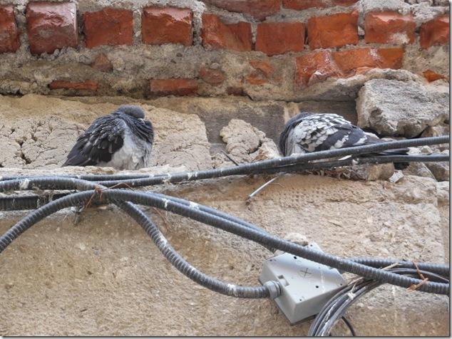 Pigeons,Union Station,Toronto